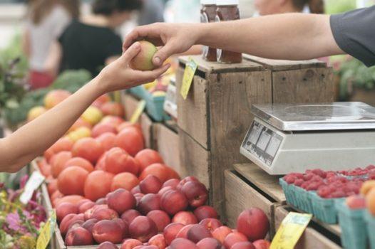 Start Rural Homesteading Business