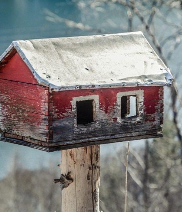 homelessness is not for birds