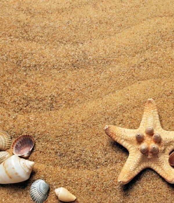 Seashells How To Make Big Money With Little Shells