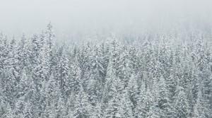 Winter Energy Costs