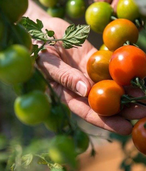 3 Best Vegetables For Beginner Gardeners