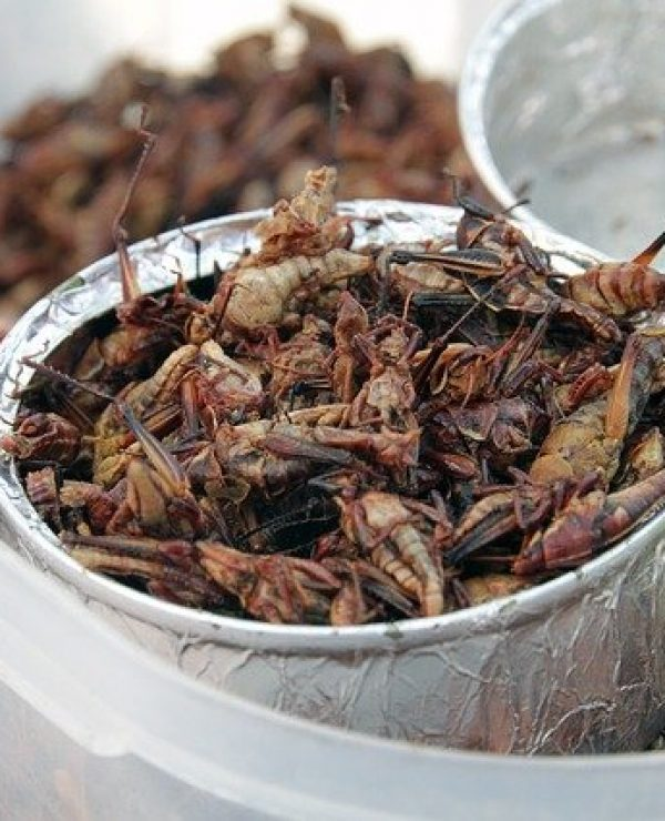 Grasshoppers Are The Meat Of The Future