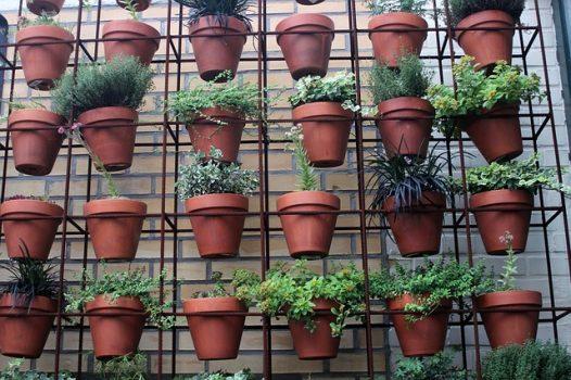Make Money Buying And Selling Houseplants