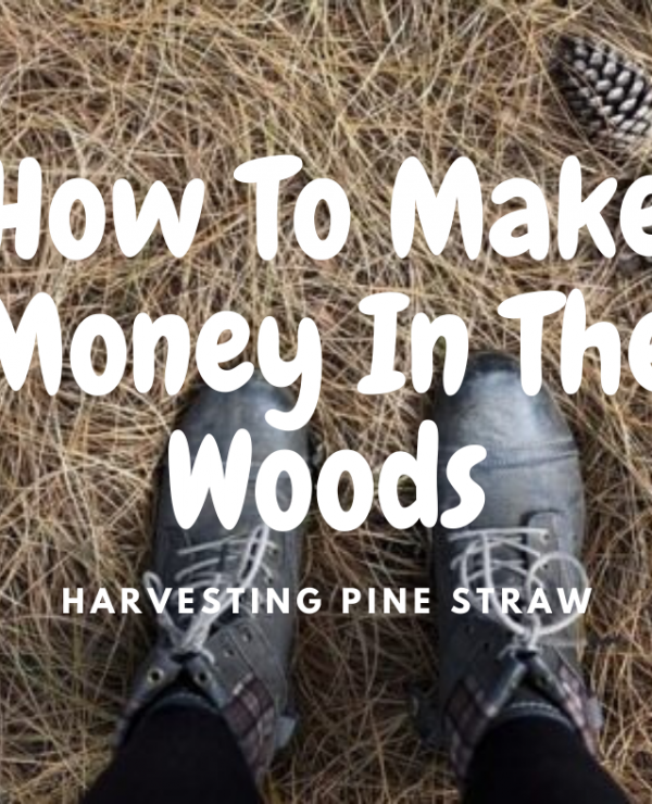 How To Make Money In The Woods Harvesting Pine Straw