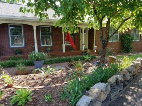 Big News: Launching Rural Money Homestead Garden Blog