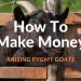 Make Money Raising Pygmy Goats